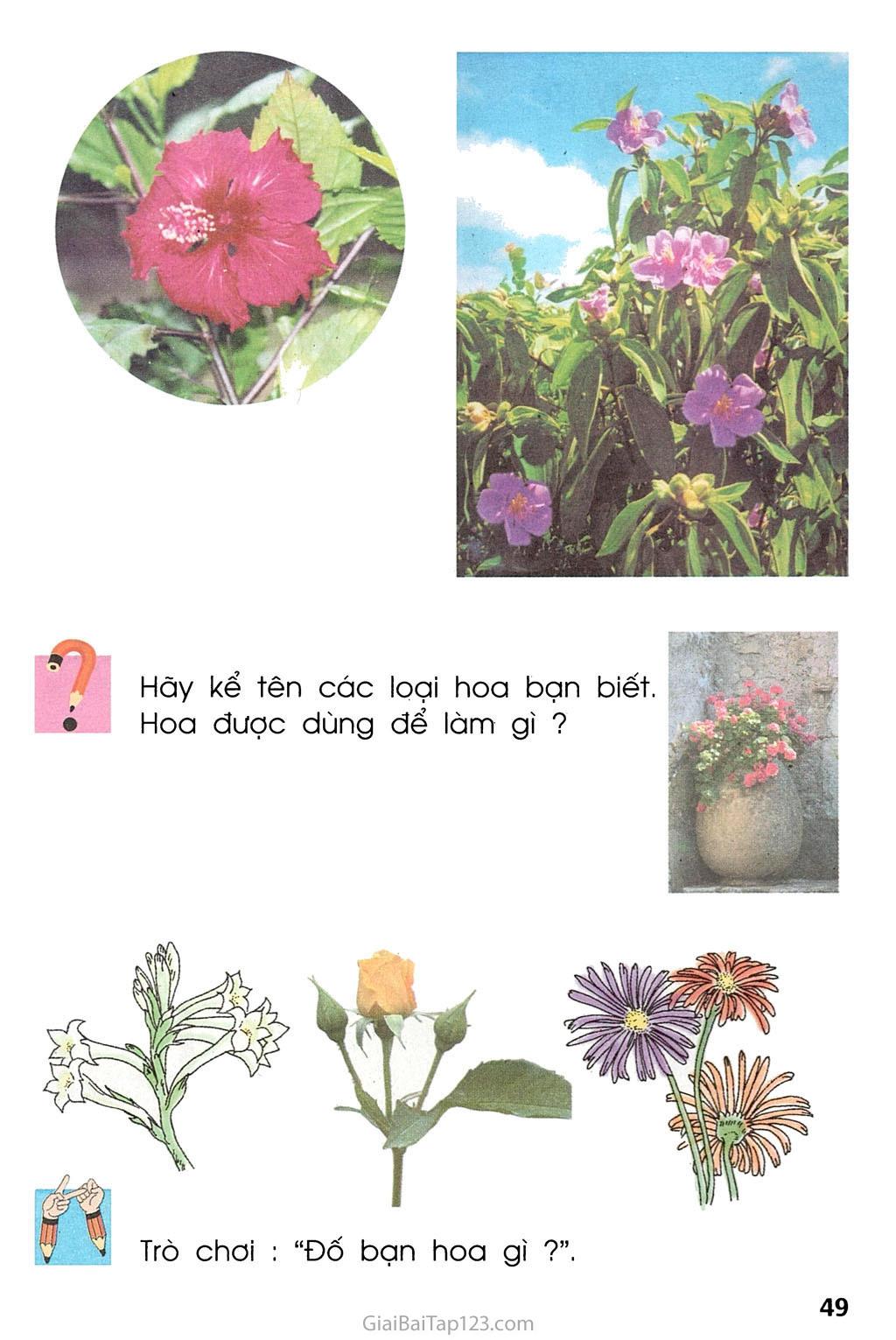 Bài 23. Cây hoa trang 2