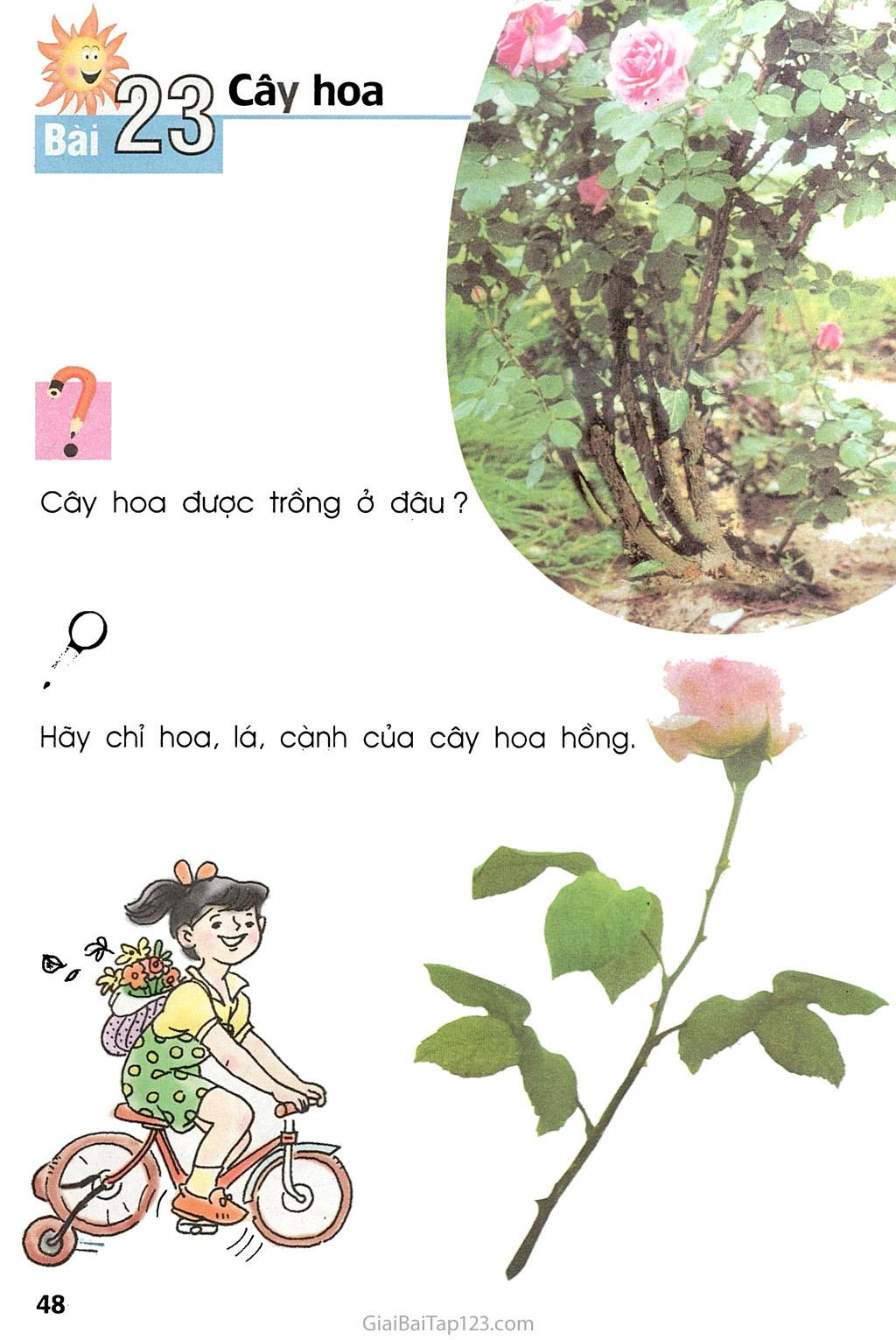 Bài 23. Cây hoa trang 1