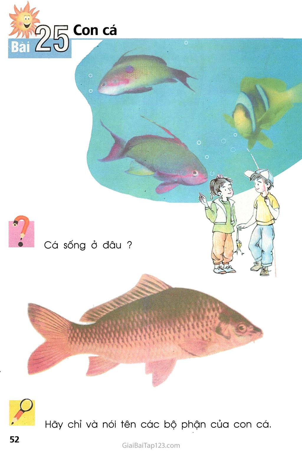 Bài 25. Con cá trang 1