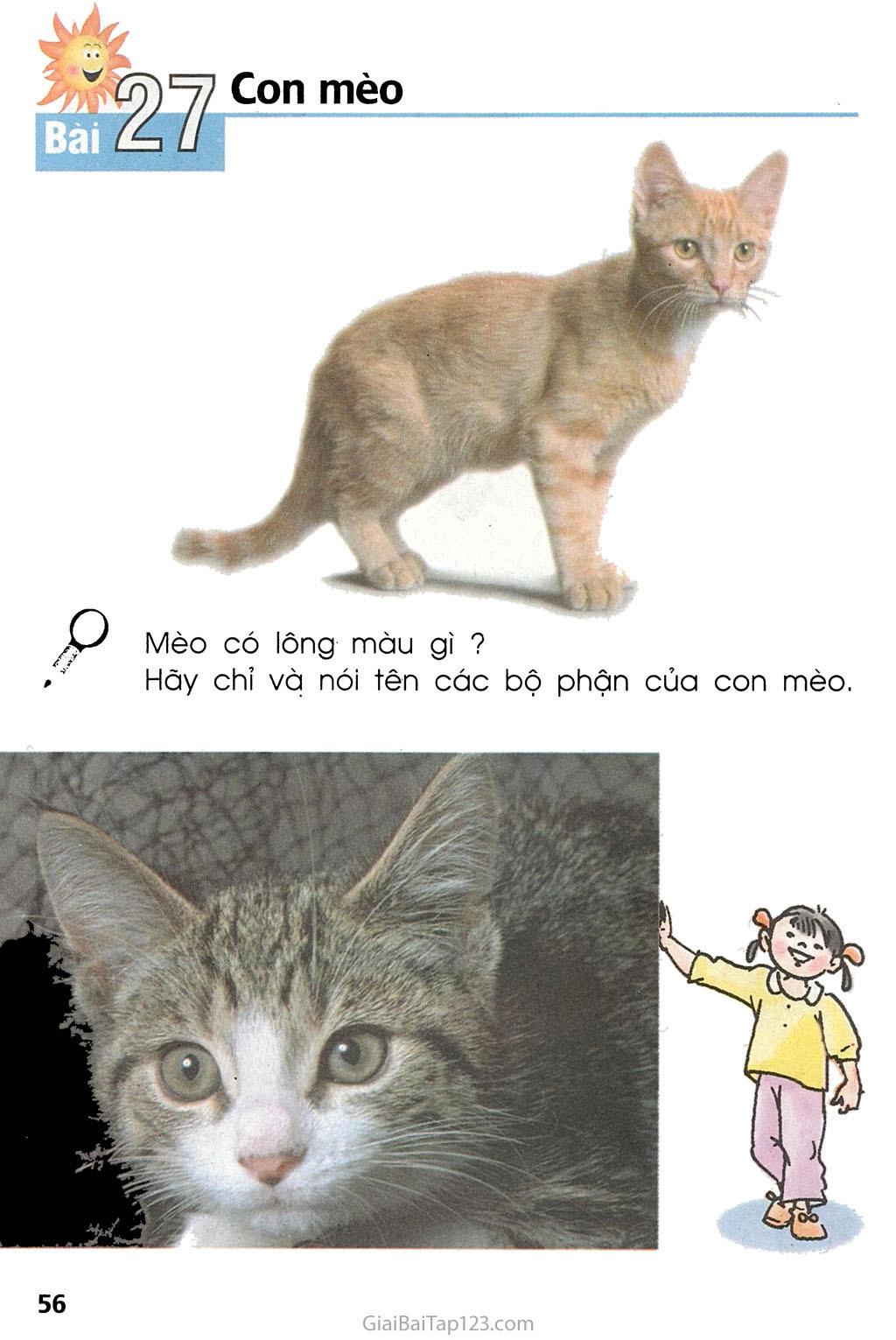 Bài 27. Con mèo trang 1