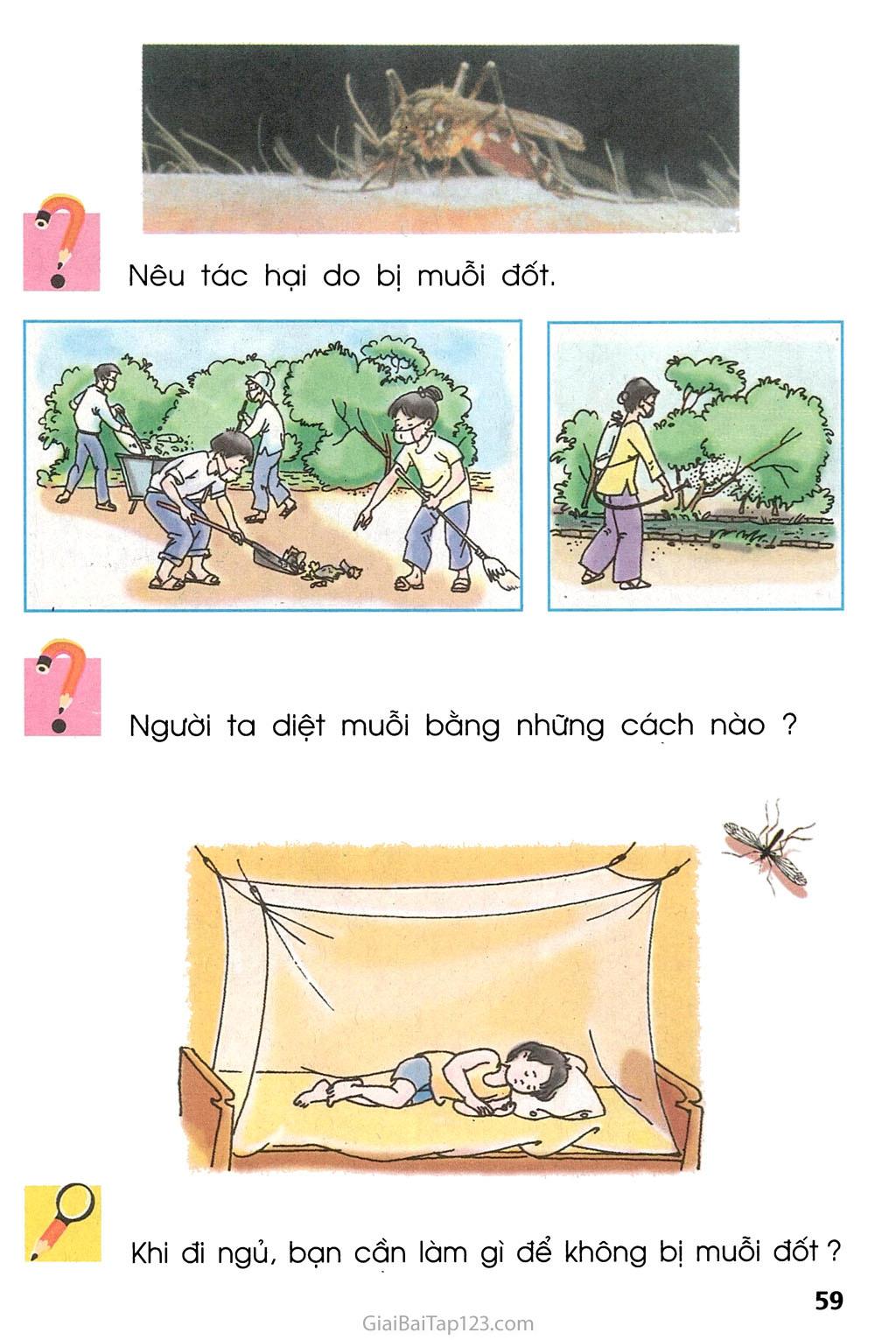 Bài 28. Con muỗi trang 2