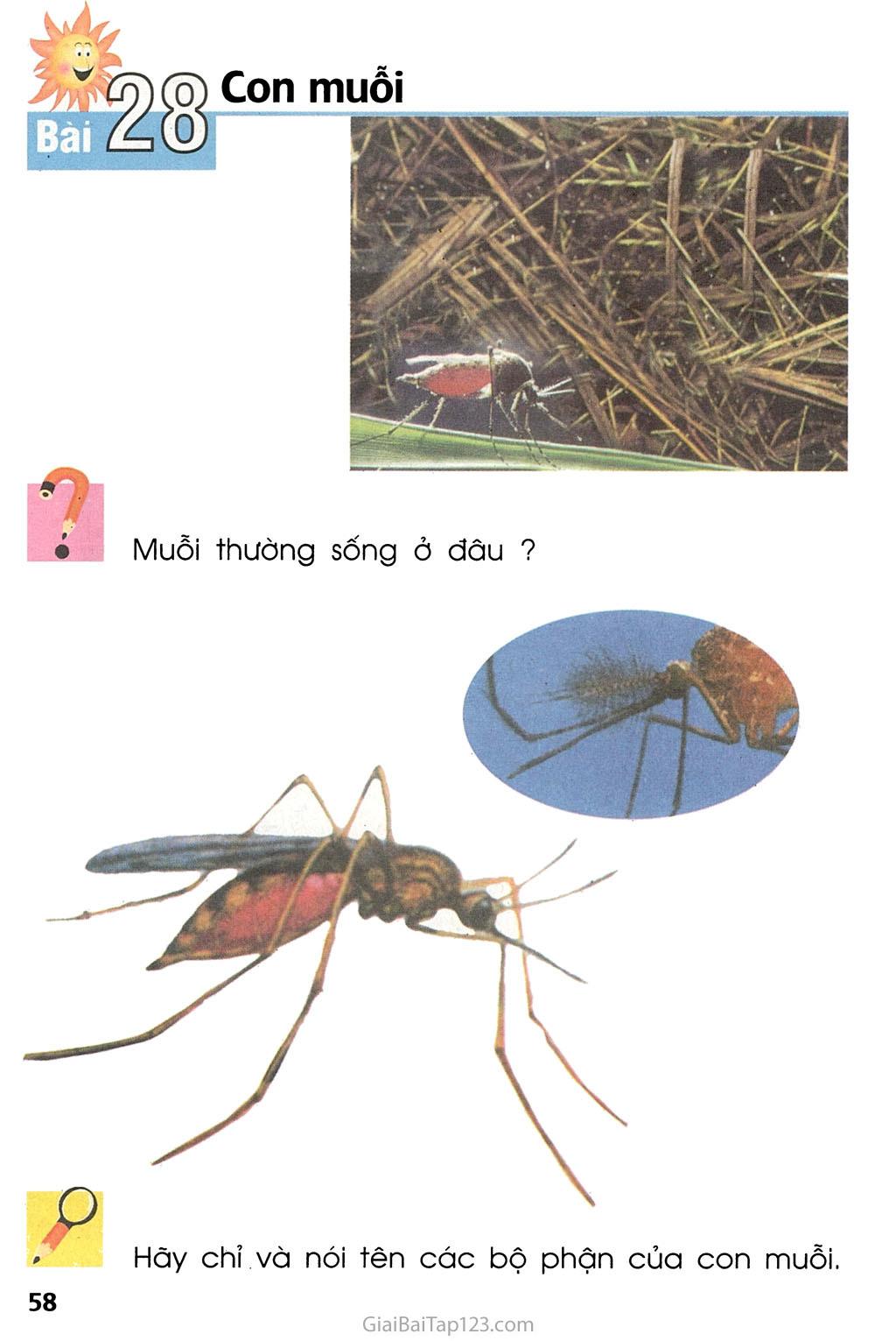 Bài 28. Con muỗi trang 1