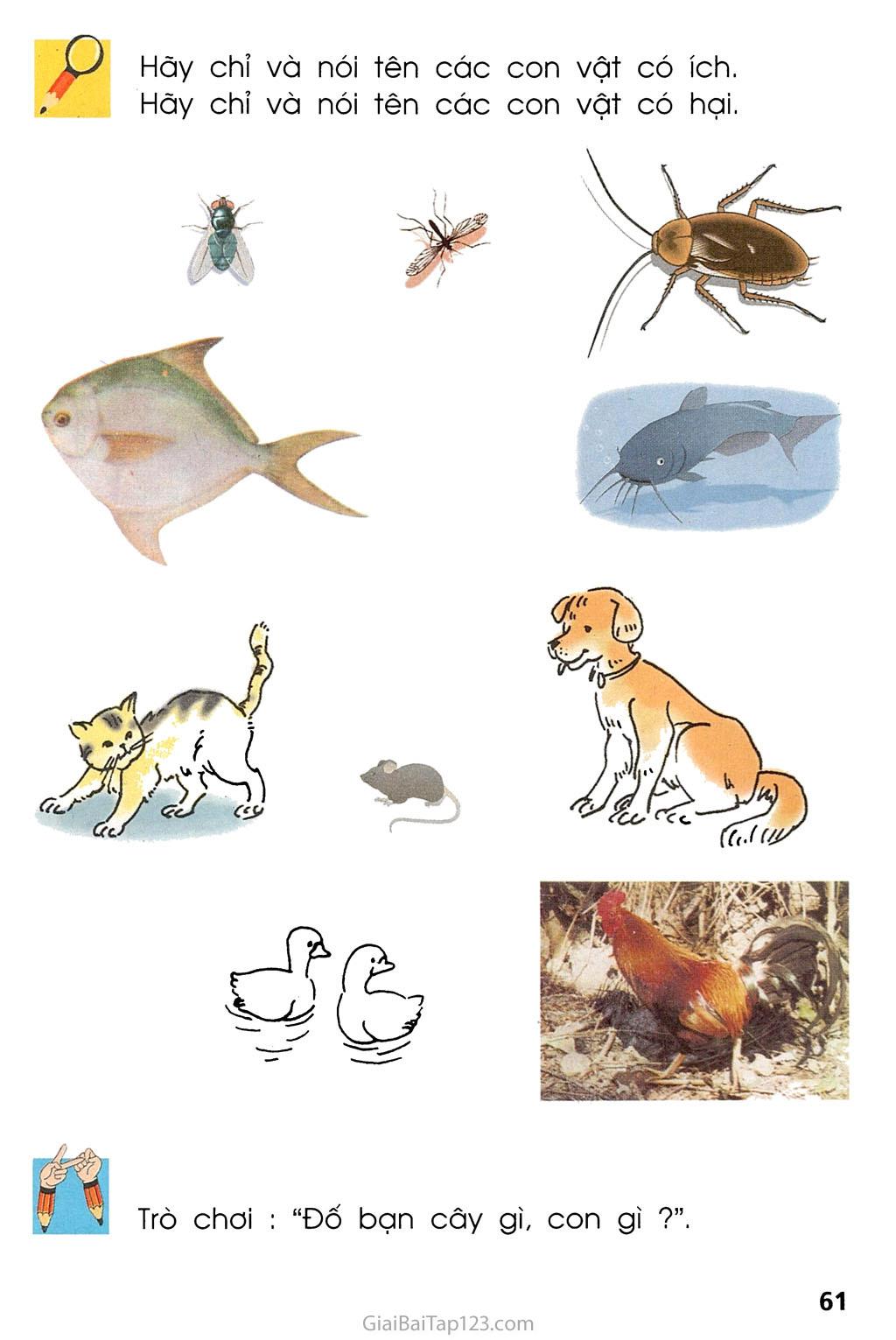 Bài 29. Nhận biết cây cối và con vật trang 2