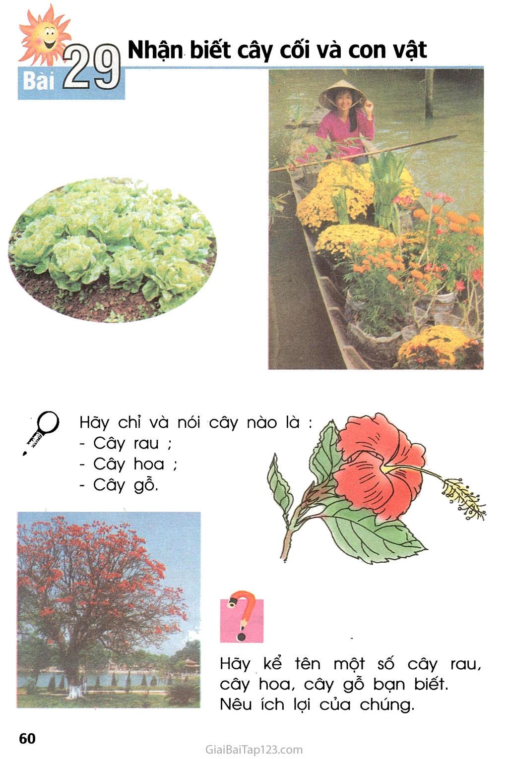 Bài 29. Nhận biết cây cối và con vật trang 1