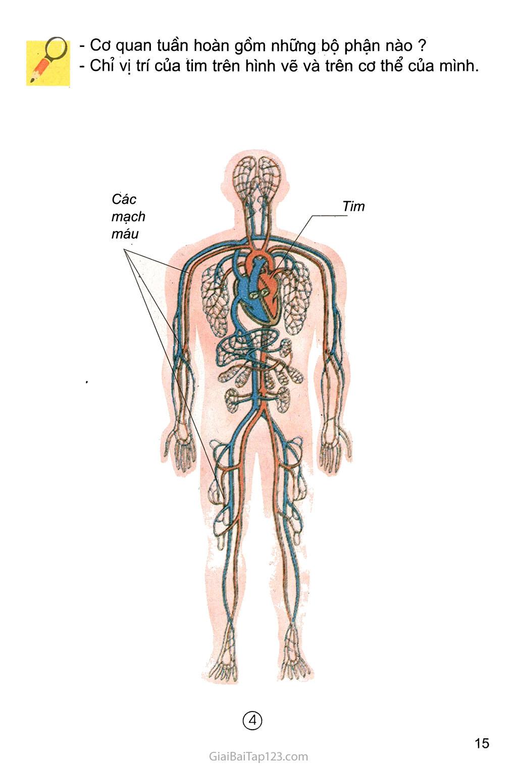 Bài 6. Máu và cơ quan tuần hoàn trang 2